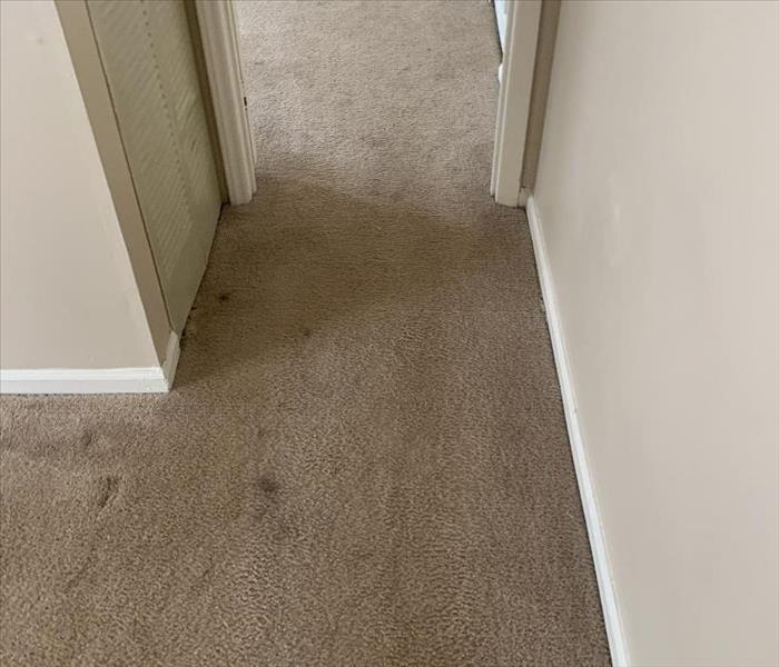 Dirty Carpet in a hallway at an apartment in Laurens, SC