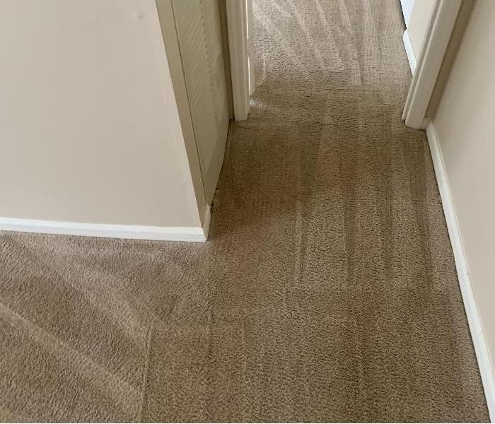 Hallway Carpet after SERVPRO cleaned the carpet