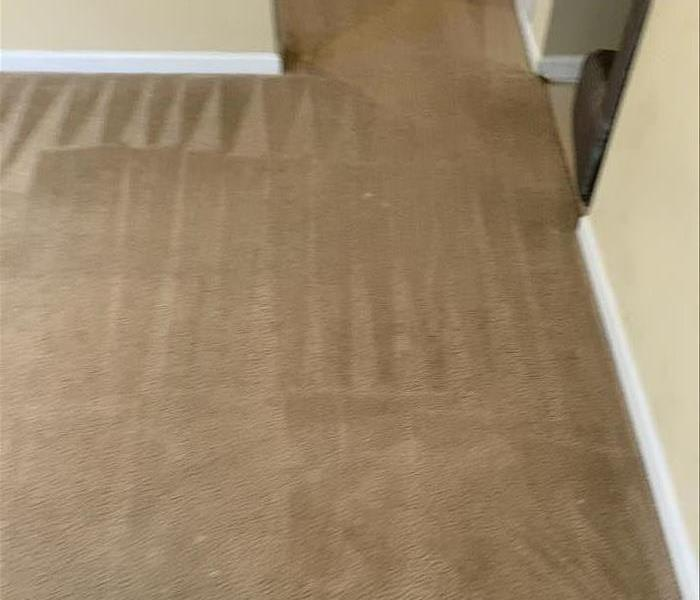 Clean carpet at a home in Newberry, SC